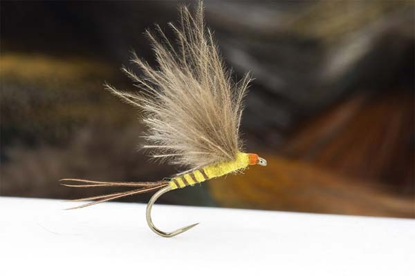 cdc fly